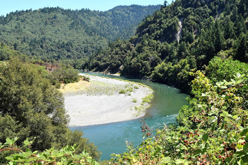 Klamath River, Oregon, Curves amid Deep Forest with Berry Bushes in Foreground royalty free stock images