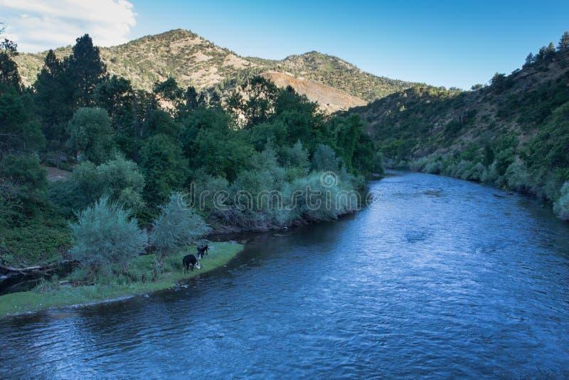 Klamath rzeka w Kalifornia zdjęcia royalty free