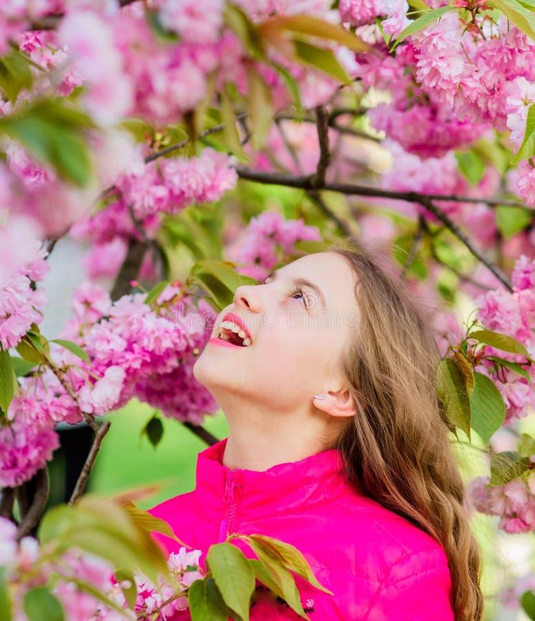 Klappstuhl auf Strand in Brighton Kindheitssch?nheit glückliches Mädchen in der Kirschblume Kirschbl?te-Baumbl?hen kleine Blume d lizenzfreie stockfotos