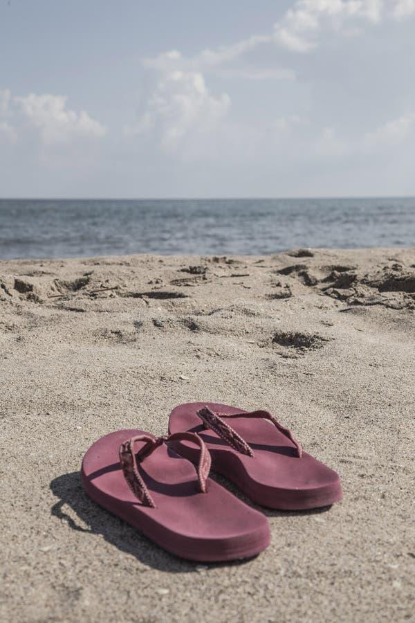 Klapy na piaskowatej plaży w lecie fotografia royalty free