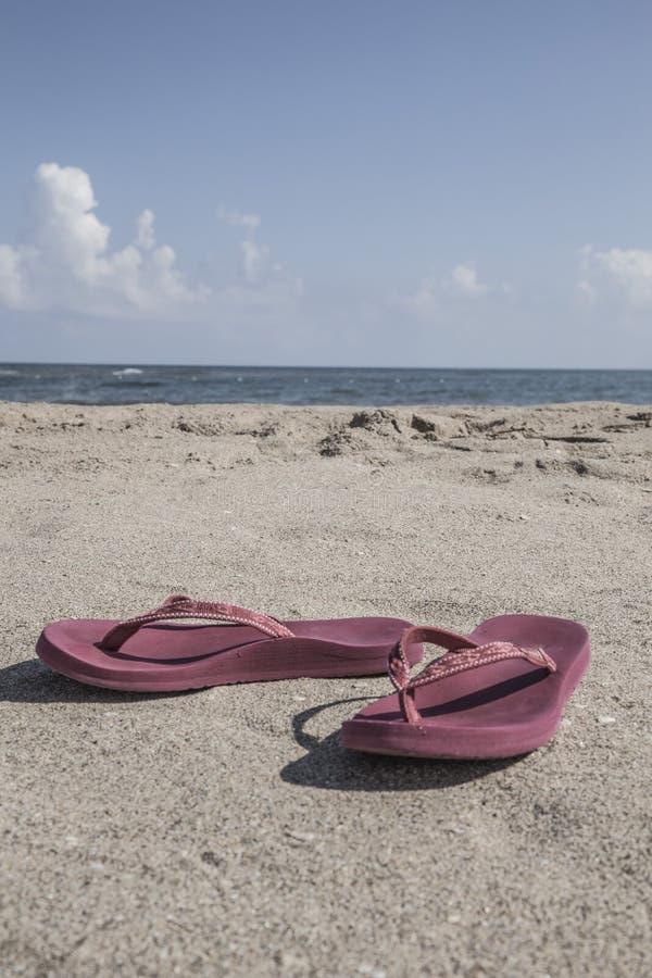 Klapy na piaskowatej plaży w lecie obraz royalty free
