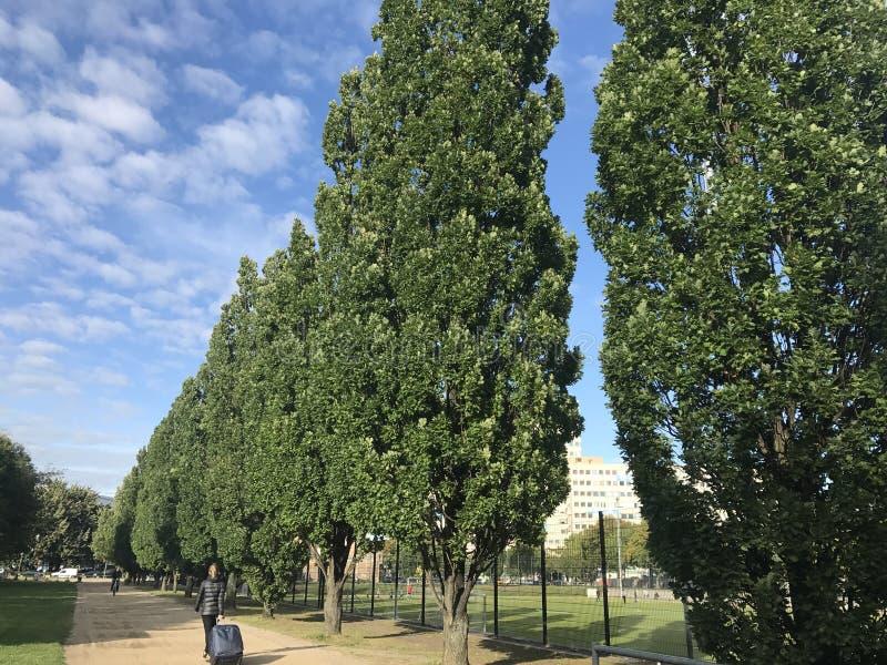 Klar blå himmel och träd royaltyfri foto