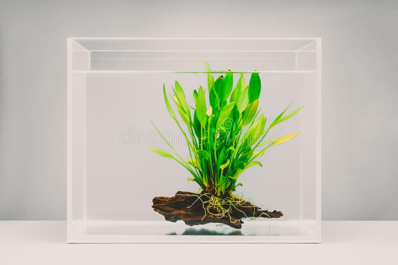 Klar fiskbehållare med den vatten- växten arkivfoton