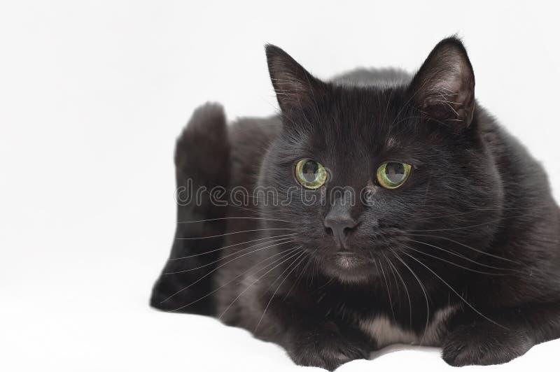 klar fjäder för svart katt till arkivfoton