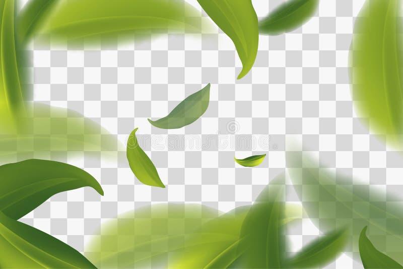 klar fliegende grüne Teeblätter, transparente Hintergrund Vektorillustration lizenzfreie abbildung