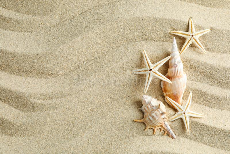 Klar havssand med snäckskal och sjöstjärnor, utrymme för text f?r sommarterritorium f?r katya krasnodar semester fotografering för bildbyråer