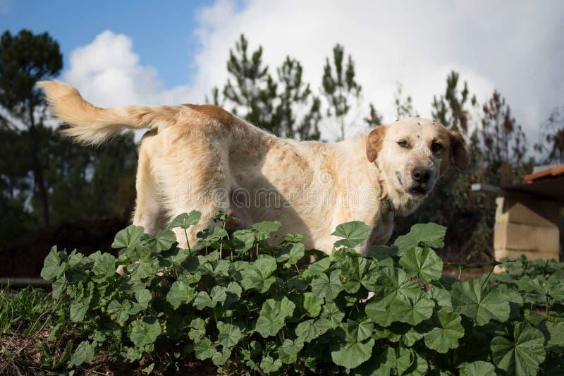 Klar himmel poserar hunden royaltyfria foton