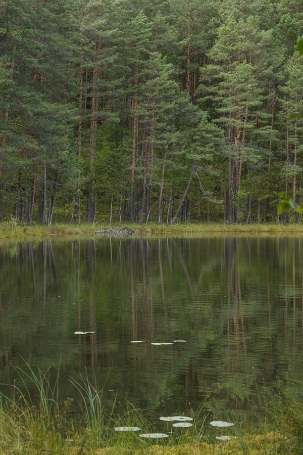 Klar lake royaltyfri foto