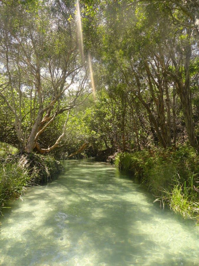 Klar liten vik på Fraser Island Australia royaltyfria foton