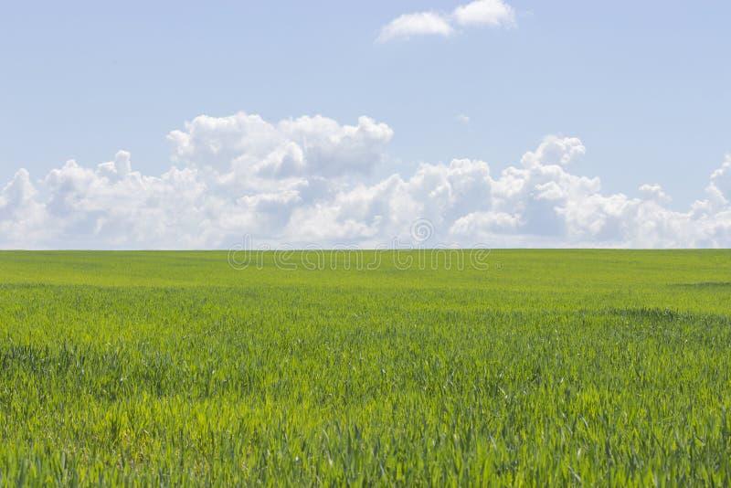 Klar solig dag, grönt gräs och blå himmel, landskapbakgrundstapet Härlig natur, grönt fält, vita moln i himlen royaltyfria bilder