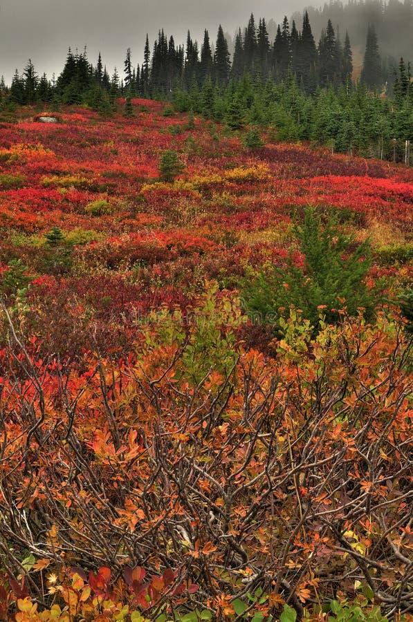 Klare Farben des Herbstes lizenzfreie stockfotos