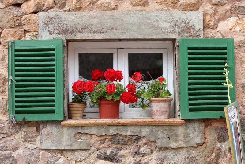 Klare rote Pelargonien auf einem Fensterbrett lizenzfreies stockbild