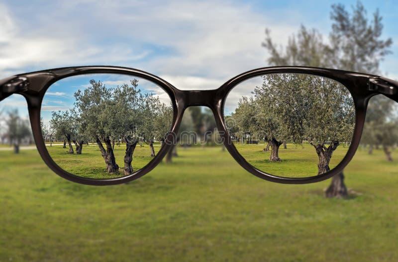 Klare Vision über Baumfeldhintergrund lizenzfreie stockfotos