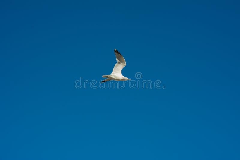 Klarer blauer Himmel lizenzfreie stockfotografie