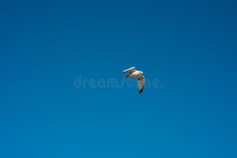 Klarer blauer Himmel stockbild