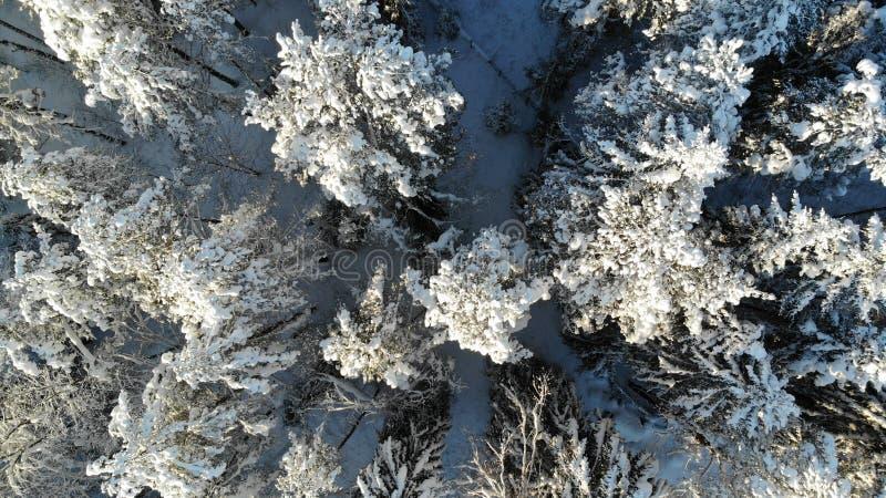 Klarer eisiger Tag in den Bäumen des Waldes bedeckt mit Schnee Vogel ` s Augenansicht Region Russlands St Petersburg stockfoto