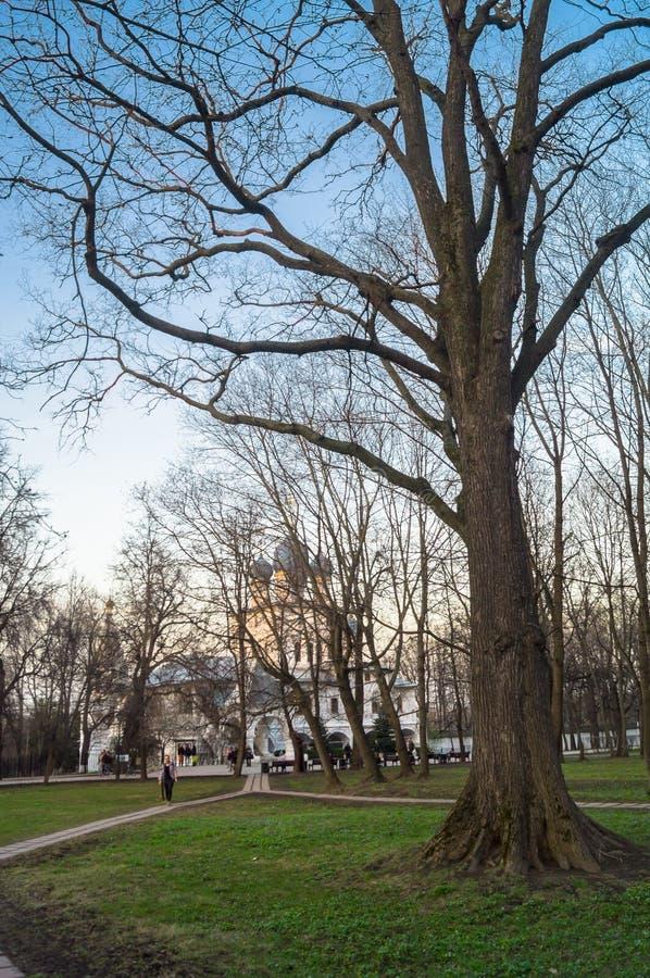 Klarer Frühlingsabend im Park des Zustand Museums Kolomenskoye, Moskau stockfotografie