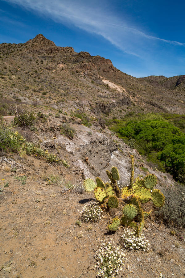 Klarer Westnebenfluß Arizona lizenzfreie stockbilder