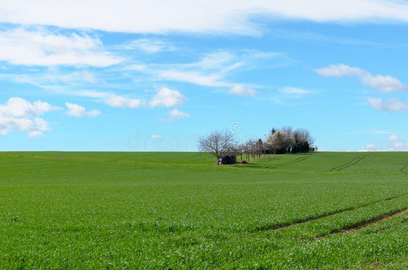 Klares grünes landwirtschaftliches Feld mit entfernten Bäumen stockfotografie