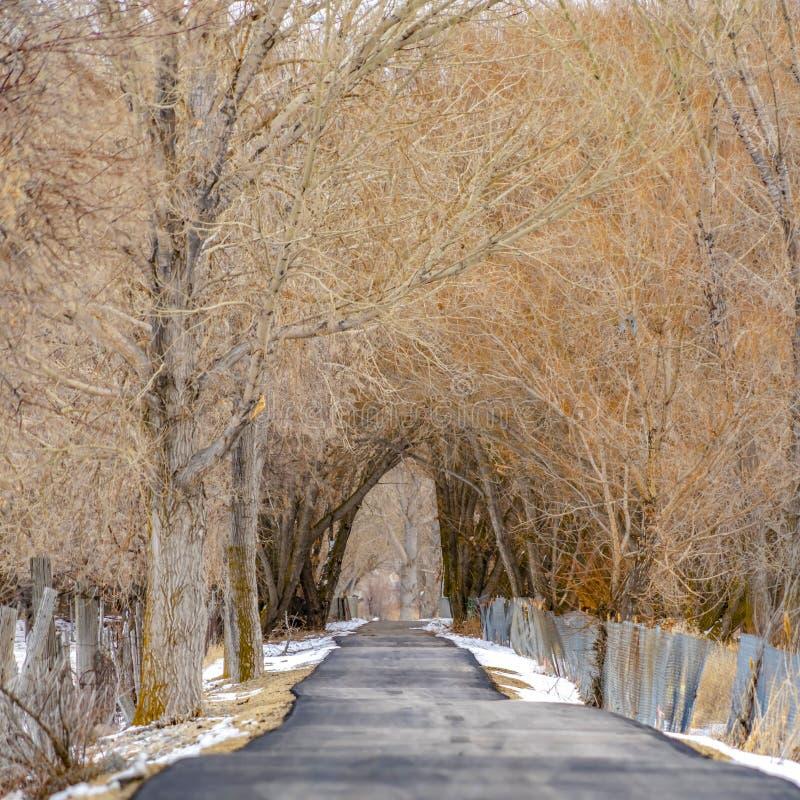 Klares Quadrat pflasterte lang Straße im schneebedeckten Wald, der mit Bäumen gezeichnet wurde und den Zaun, der im Winter angese stockbild
