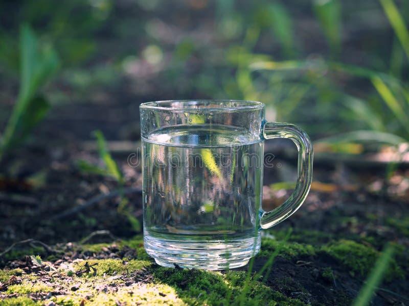 Klares Wasser in einem Becher Moos, Gras, Wald lizenzfreies stockbild