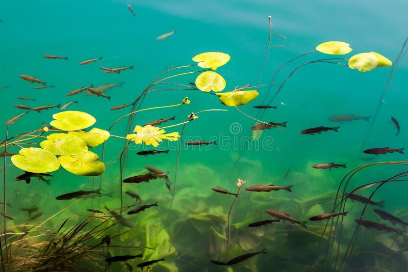 klart fiskvatten arkivfoton