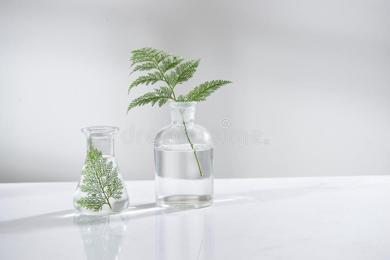 Klart vatten i den glass flaskan och lilla medicinflaskan med naturliga gröna tjänstledigheter i bakgrund för bioteknikvetenskaps royaltyfri foto
