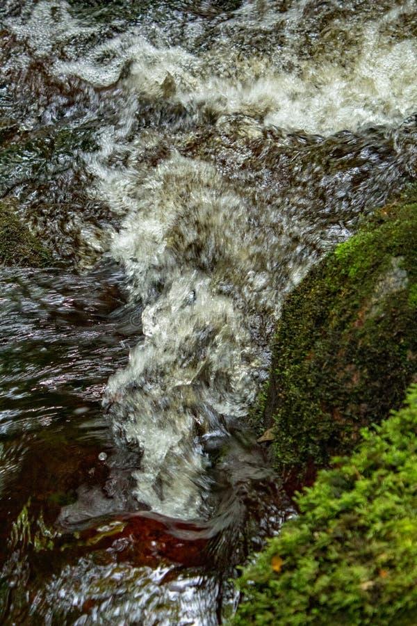 Klart vatten som bubblar ner en skogsmarkström royaltyfri bild