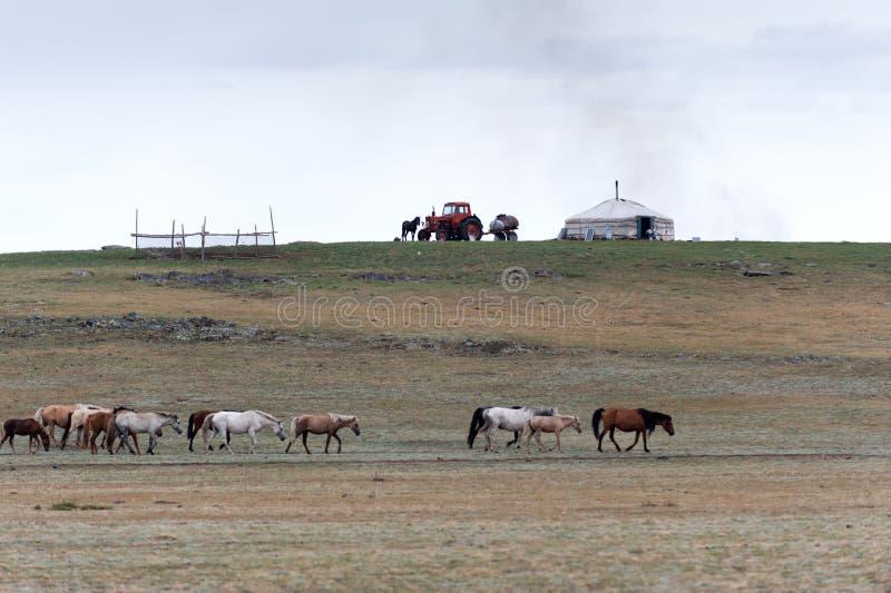 Klassiek de zomer nomadisch kamp in de steppe van Mongolië stock foto's
