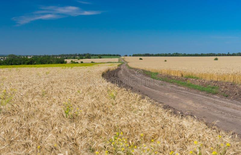 Klassiek Oekraïens de zomerlandschap met graangebieden stock foto's