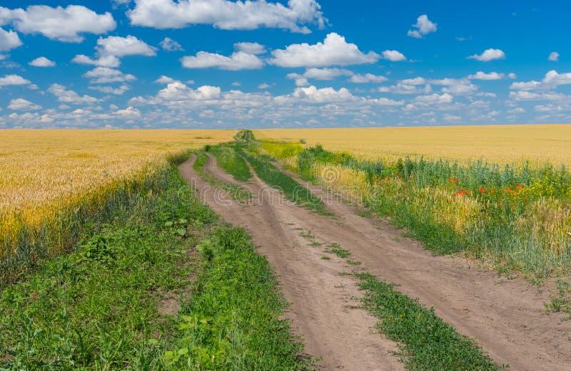 Klassiek Oekraïens landelijk landschap met tarwegebied stock afbeeldingen