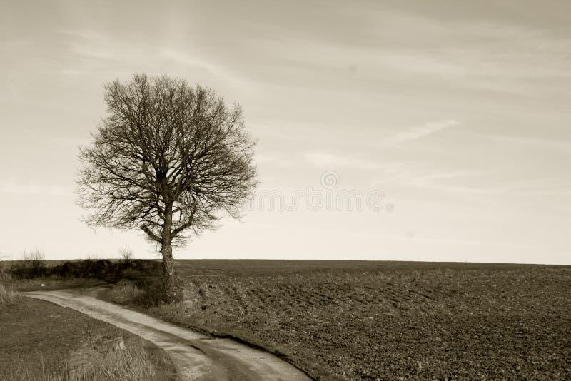 Klassieke mening, een boom tijdens de winter stock fotografie