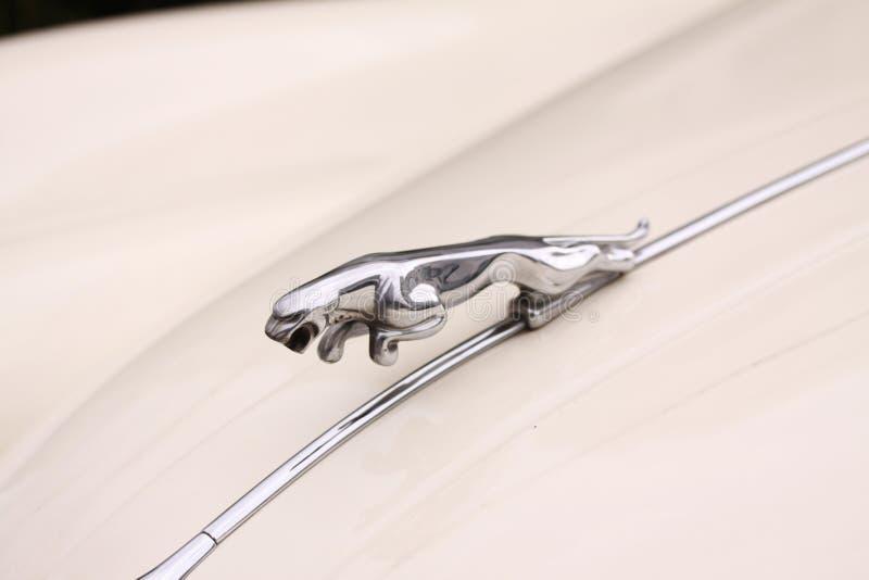 Klassische Haubenverzierung von der Weinlese Jaguar Motor- Jaguar im Sprung lizenzfreies stockbild