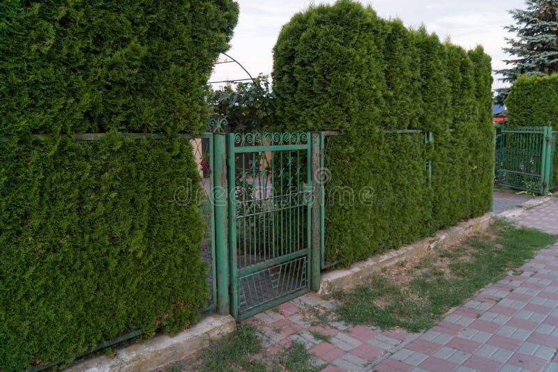 Klassisches Designgrün-Schmiedeeisentor in einem schönen grünen Garten stockfoto