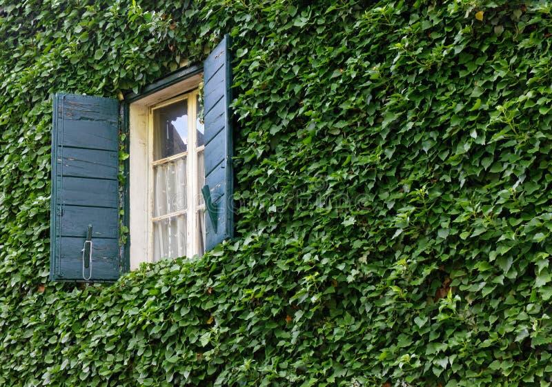 Klassisches Fenster auf Ivy Covered Exterior Wall lizenzfreie stockbilder