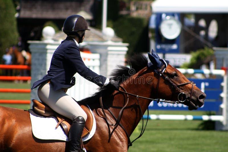 klassisk hampton hästshow royaltyfri fotografi