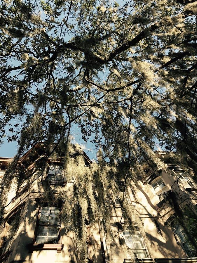 Klassisk mossig trädhängning över ett hus i savannahen - Georgia - USA arkivfoton