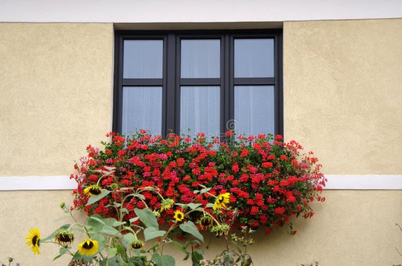 Klassiskt fönster med röda blommor royaltyfria bilder