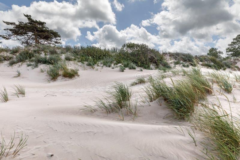 Klassiskt strandlandskap för baltiskt hav royaltyfri fotografi