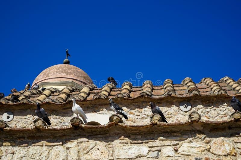 Klasyczna scena gołębie w białym, czarnym i popielatym kolorze na terakotowej dachowej płytce stary klasyczny mały kościół w ziem zdjęcie royalty free
