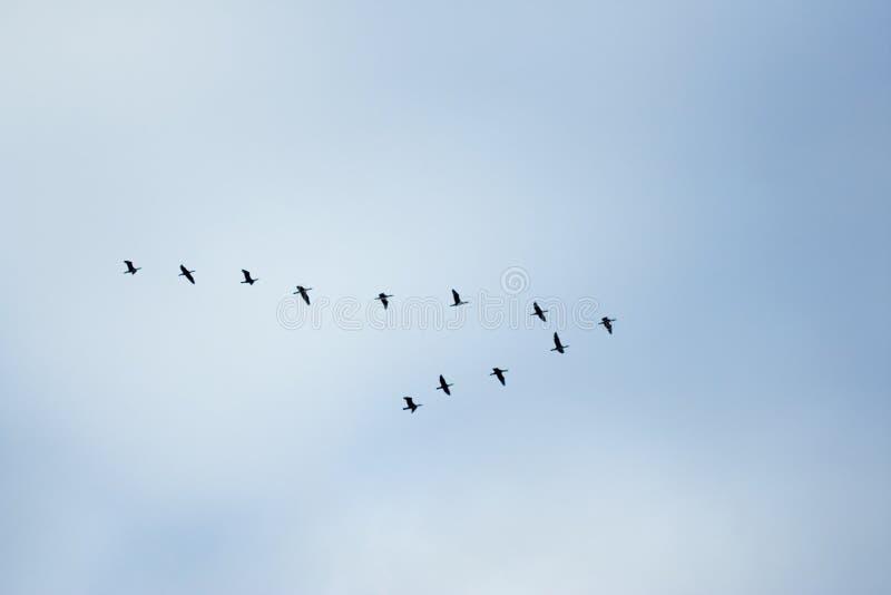 klasyczne ptaki fotografia stock