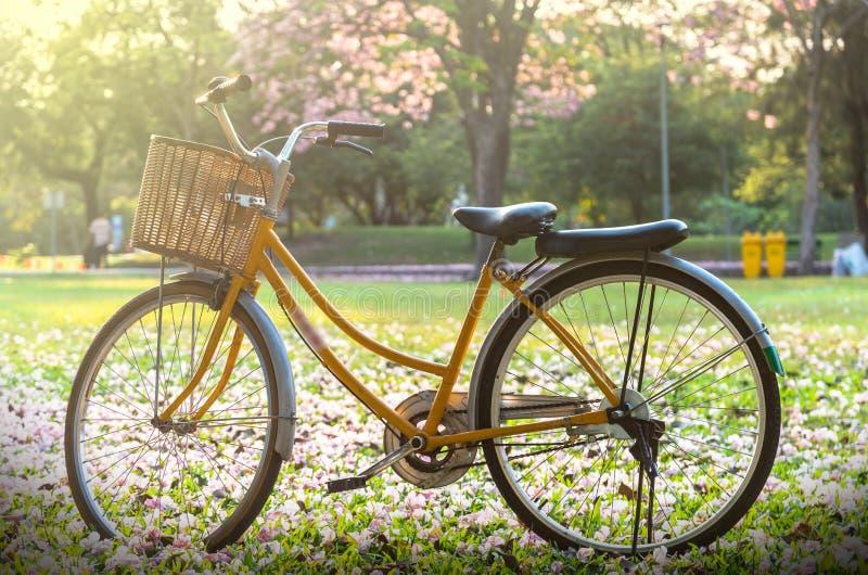 Klasyczny bicykl przy zmierzchem w głębokim lesie lub parku obraz stock