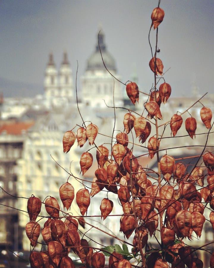 Klasyk strzelający Budapest w jesieni obraz royalty free