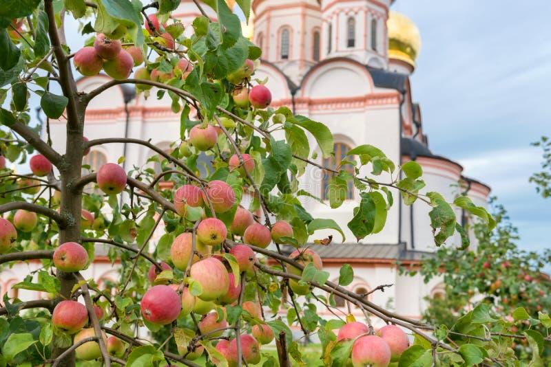 Klasztorne owoc zdjęcie stock