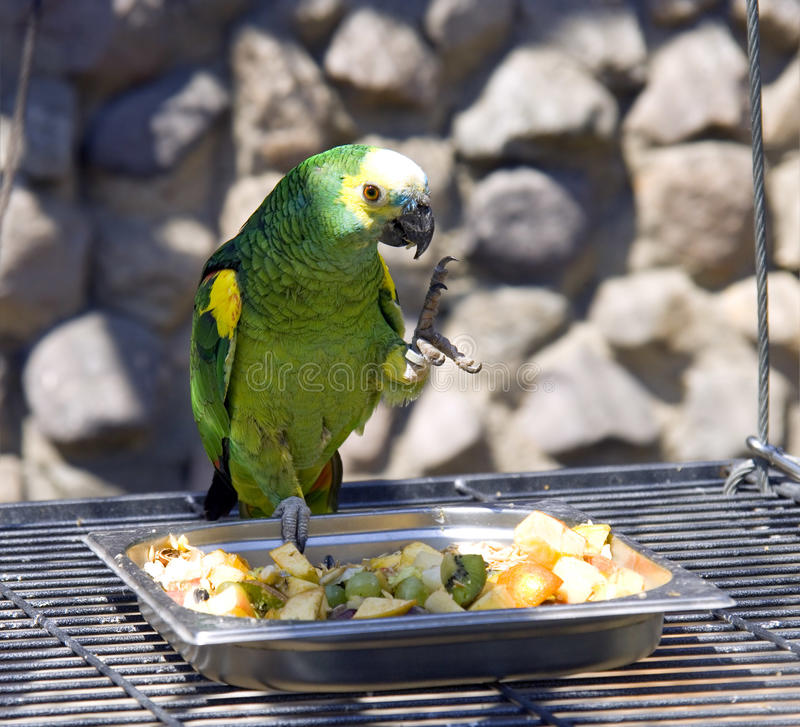 Klauwen van de het nestbek van de papegaai de groene lory vogel stock afbeelding