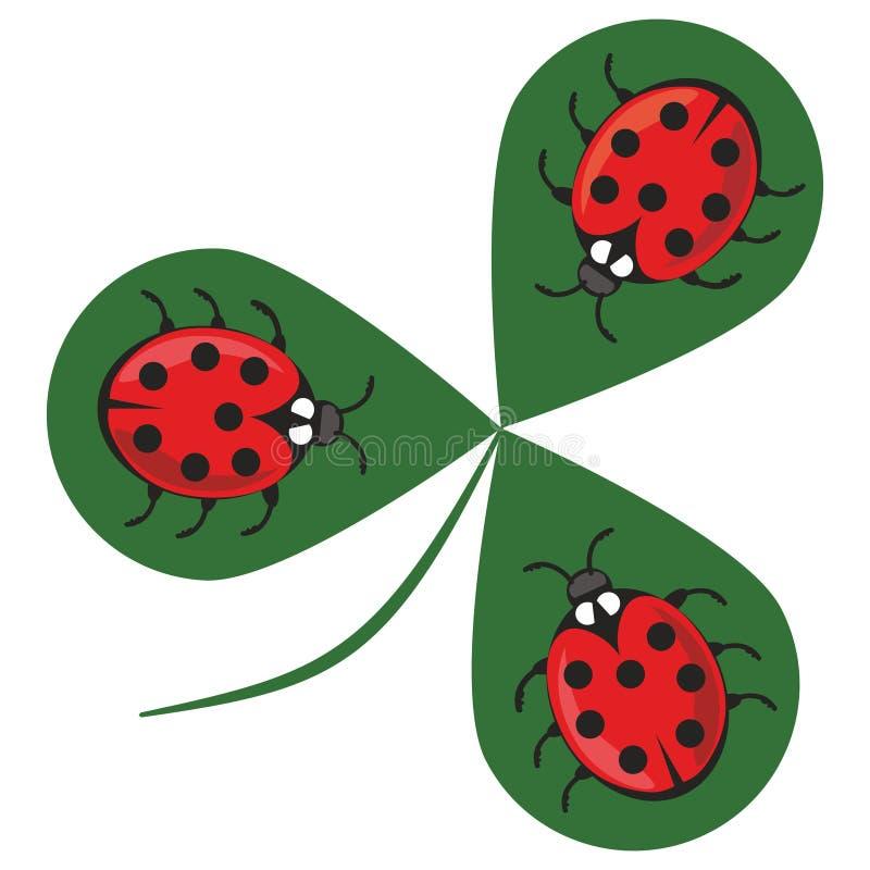 Klaverwhit drie lieveheersbeestjes Drie kleine rode kevers die op een groen klaverblad zitten Mooie vrolijke illustratie stock illustratie