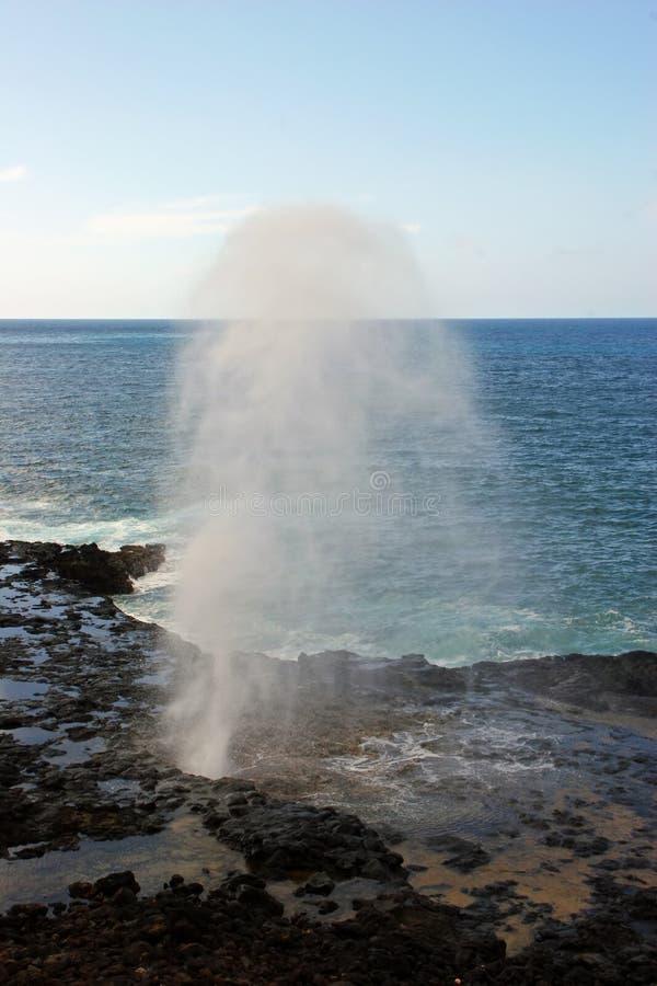 Klaxon de médisance en Hawaï images libres de droits