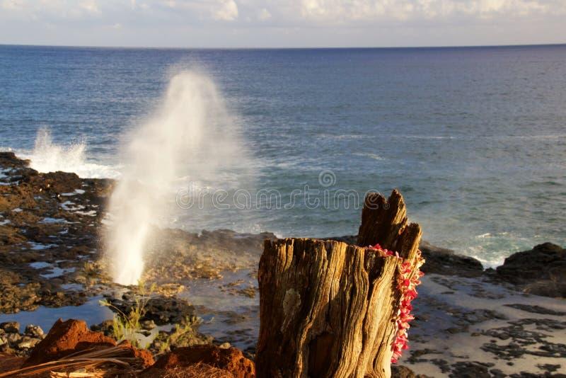 Klaxon de médisance Kauai photos stock