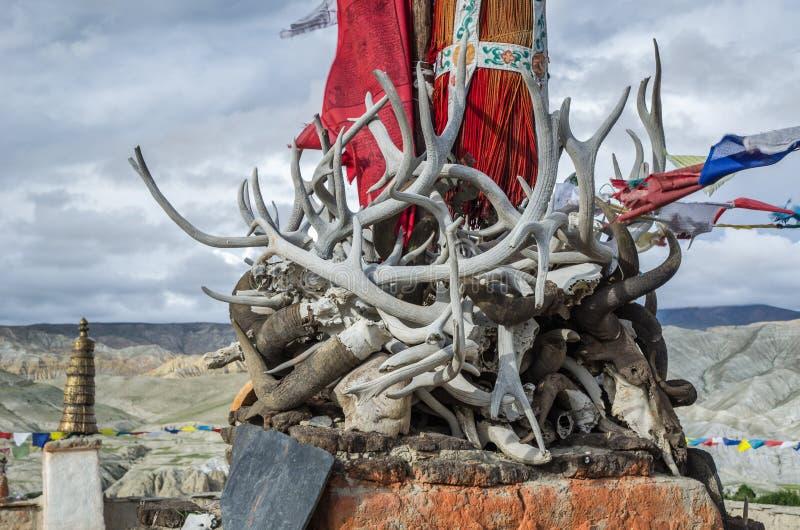 Klaxons, défenses et andouillers des animaux morts antiques, mustang supérieur, image stock