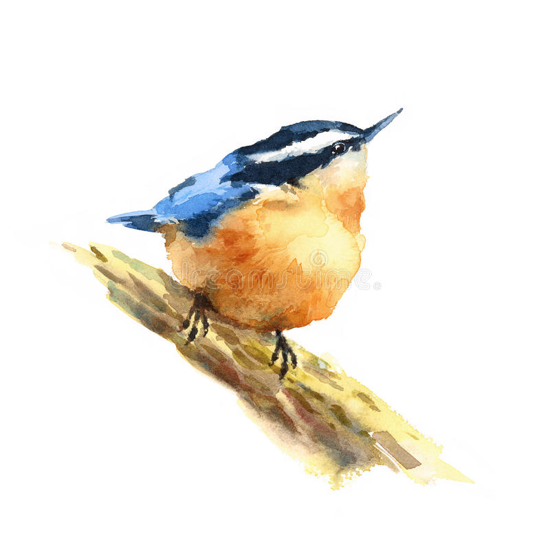Kleiber-Vogel-Aquarell-Illustrations-Hand gezeichnet vektor abbildung